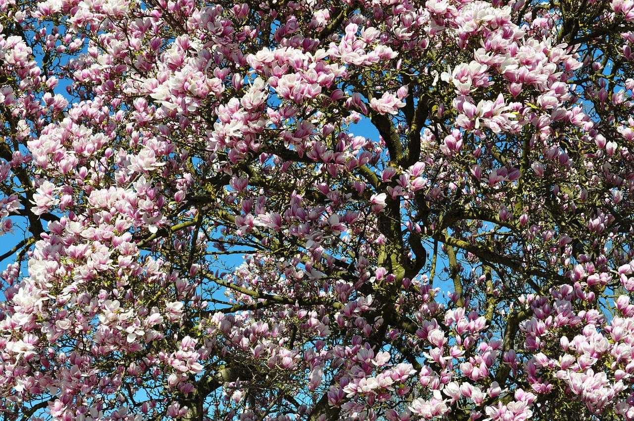 spring-211635_1280