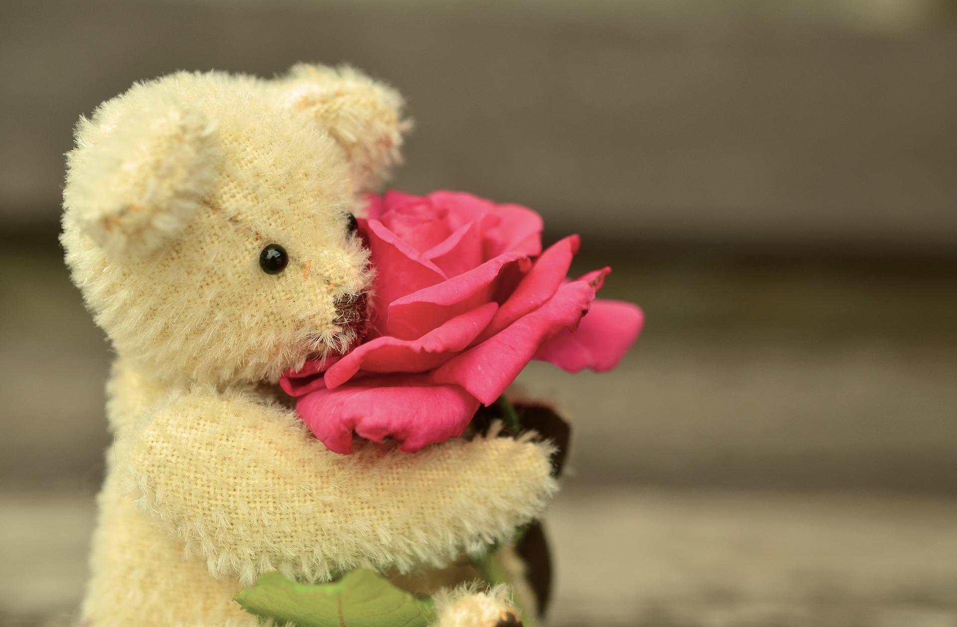 teddy-889814_1920