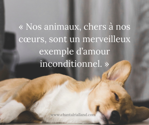 Post FB Mars 2019 Nos animaux